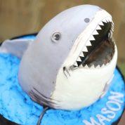 shark Birthday Cakes Missouri